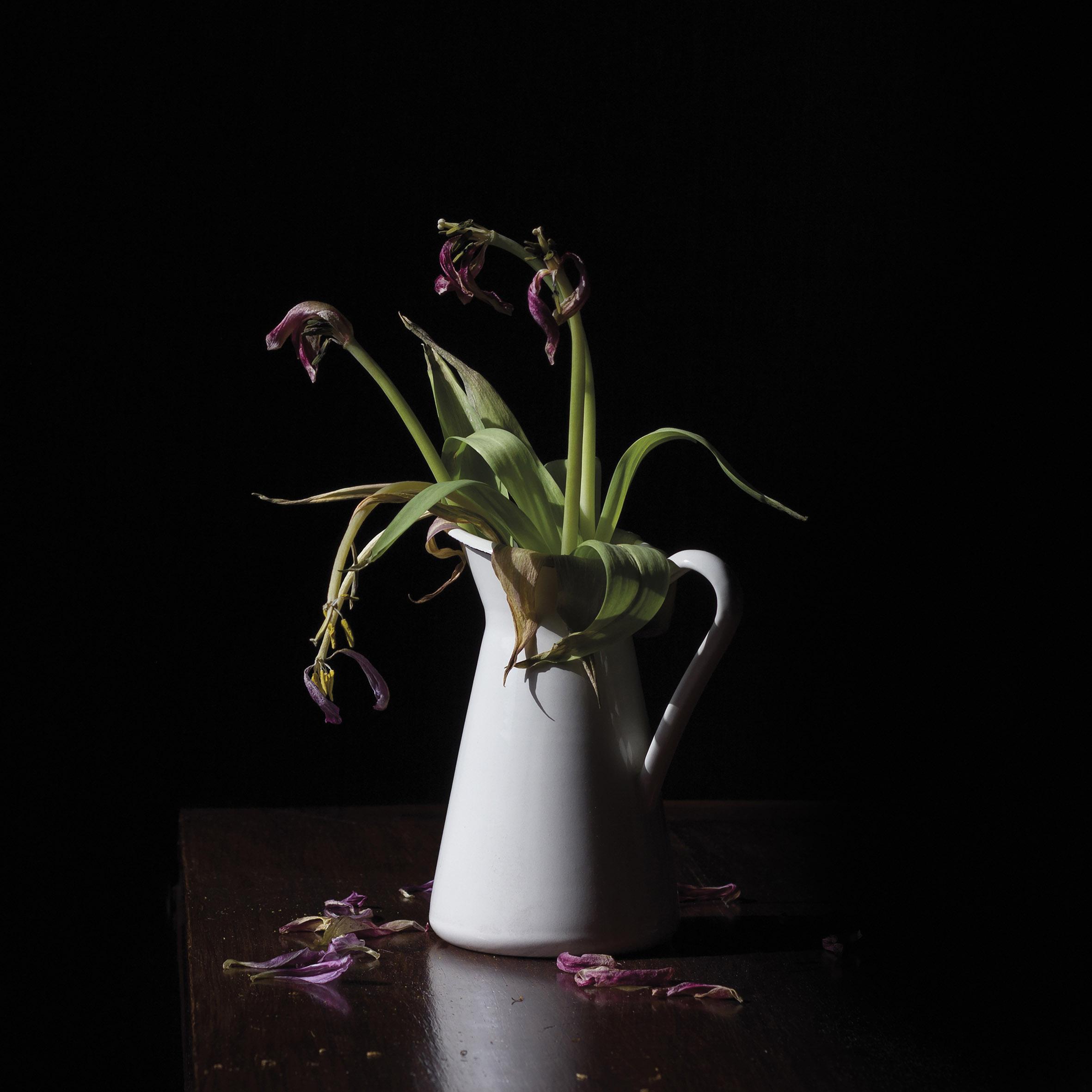 Categorie: Still Life & Food - Photographer: MILA MICHELASSI; Location: Firenze, FI, Italia